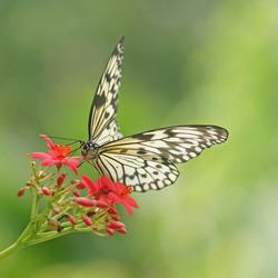 De vlinder ontwaakt