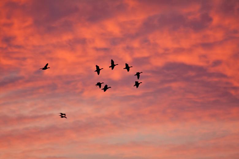 Vertrek - Bij zonsopkomst