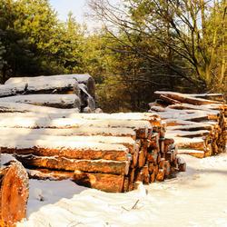 Boomstammen in de sneeuw