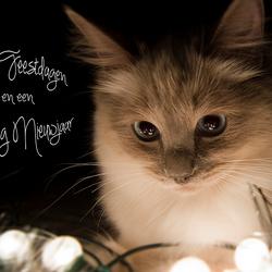 Fijne Feestdagen en een Gelukkig Nieuwjaar!