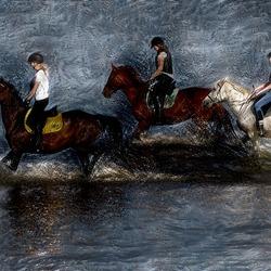 Paarden in het IJsselmeer