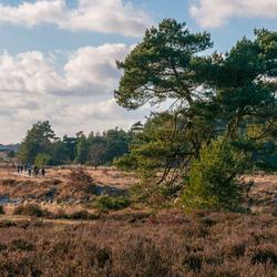 De heide en bos bij Kootwijk