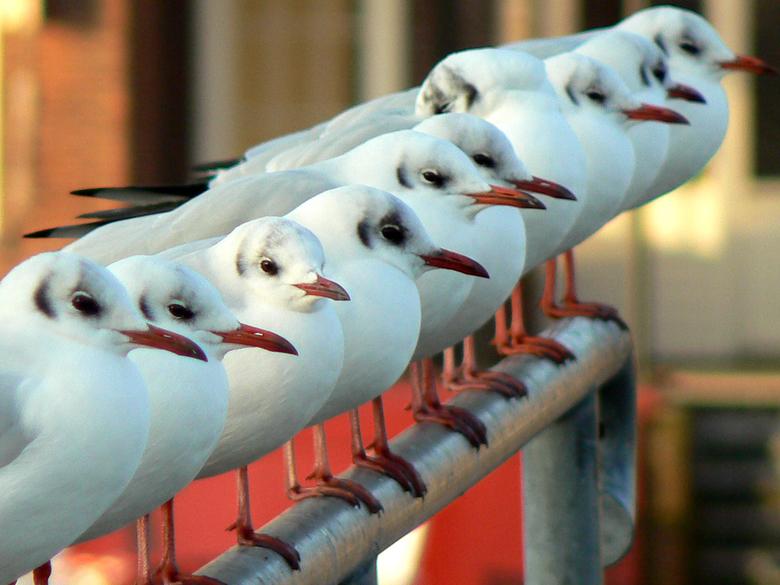 Meeuwen aan het Spaarne - Meeuwen op een steiger aan het Spaarne in Haarlem