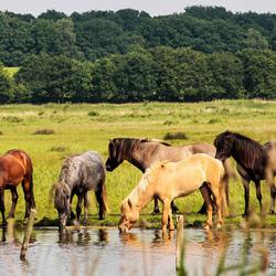 Ijslanders in de polder