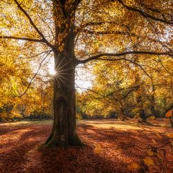 Herfst in volle glorie