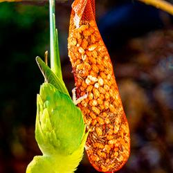Tropische vogel_1.jpg