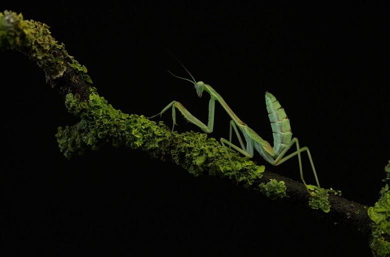 groen - een keer voor volledig scherp want dit is zo'n mooi diertje die moet je goed kunnen bekijken..heel mooi kun je bij deze de rudimentair aa