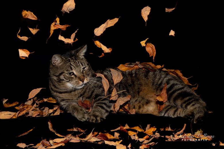 Herfst in huis - Experiment met blaadjes, zwart doek en flitslicht