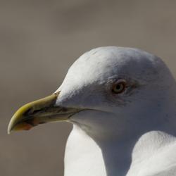 Seagulls Gaze