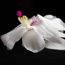 bruidskleed van de lidcactus
