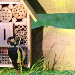 Insectenhotel verbouwing
