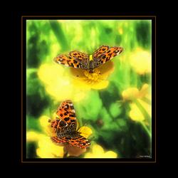 Vlinderschilderijtje!!