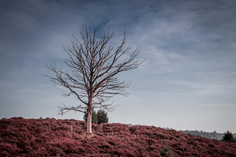 Herfst op de Veluwe -