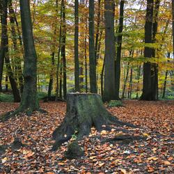herfst-bos