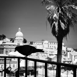 Lissabon bird