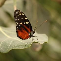 Vlindertuin de Berkenhof