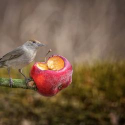 Eet meer fruit...
