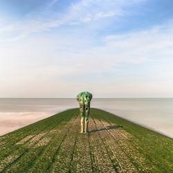 eenzaam op de golfbreker