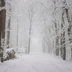 Magische Winter