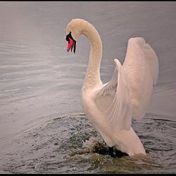 dancing on water !...