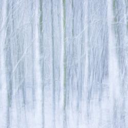 Winterbos