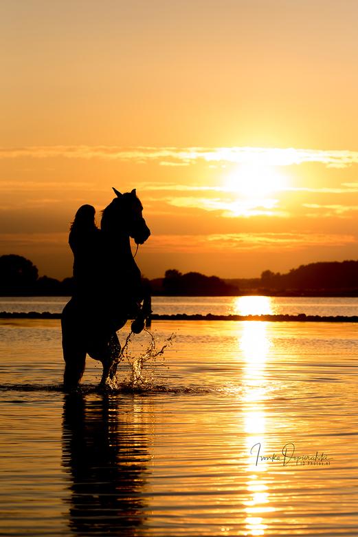 Steigerend paard en ruiter in de ondergaande zon