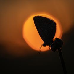 Sunrise Icarus