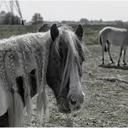 2017 5 Paard