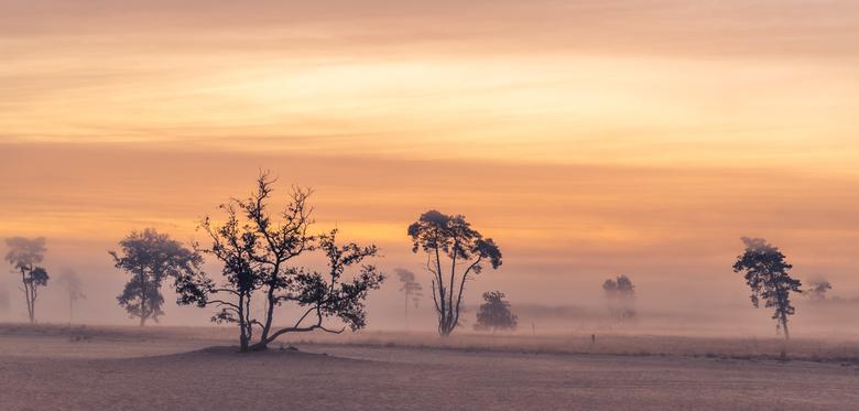 mist in de drunense duinen - een prachtige ochtend afgelopen zondag op de Drunense duinen. Er was een mooie mistlaag wat een lekker sfeertje gaf.