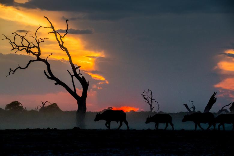 Sunset walk - Achter deze rustgevende foto zit een spannend verhaal. Na een dag rond rijden in het nationale park en weinig te zien, waren we op te te