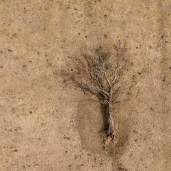 Omgevallen boom in droog landschap