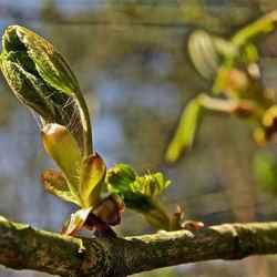 Sprong in het Licht van de Lente