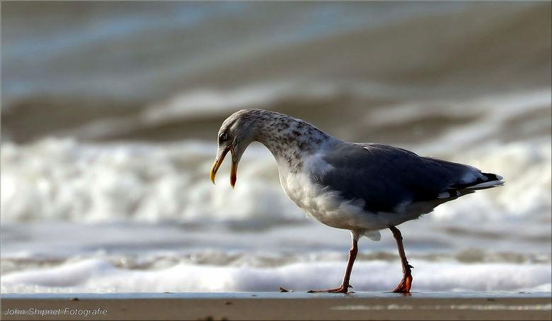 Lekker schreeuwen op het lege strand -