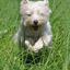 spring in het veld