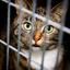Kat kijkt door tralies