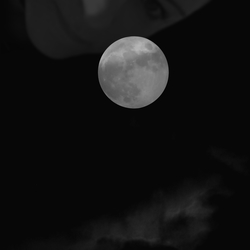 Watching the full moon