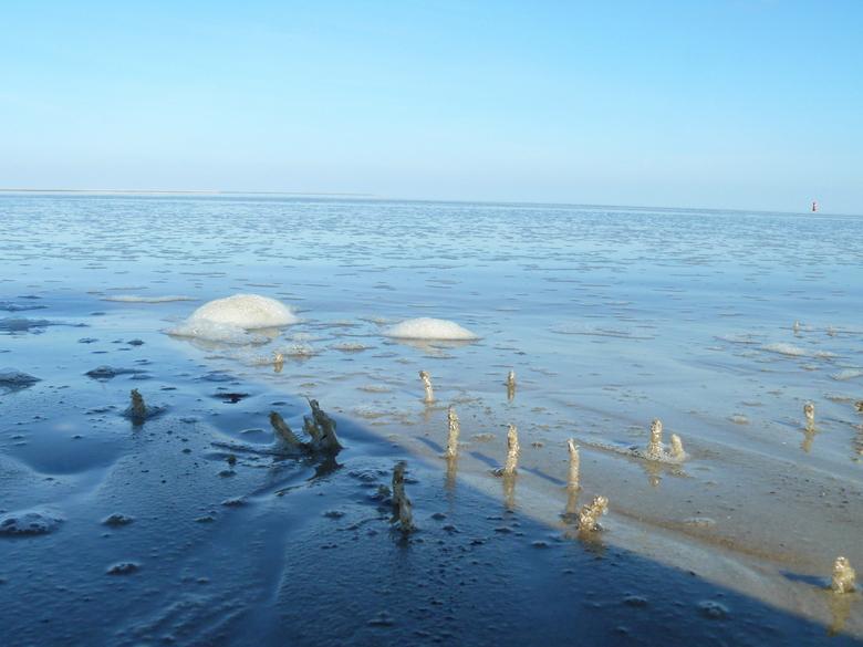 Lente in de zee - bestand zijn tegen hitte en kou, zout en zoet, droogvallen en de zuurstofloze wadmodder. Maar de volhouders kunnen profiteren van de