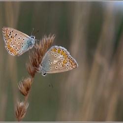 dubbel zo blauw