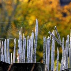Spinnenweb op schutting