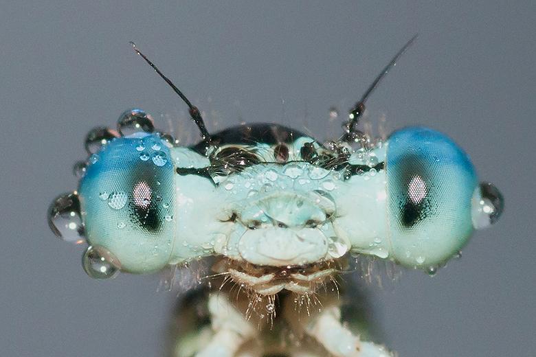 See that look in his eyes! - Wat een prachtige beestjes zijn het toch van dichtbij!<br /> <br /> Iedereen een fijn weekend gewenst en bedankt voor d