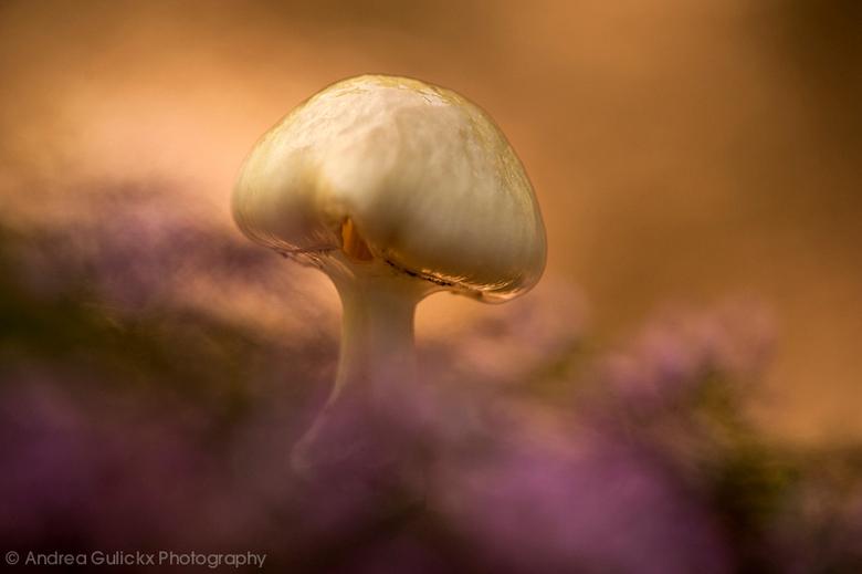 Glow in Purple