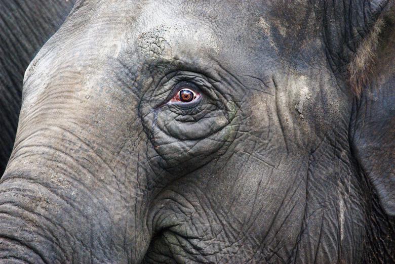 the Eye - Olifant in de dierentuin van Emmen. Het oog kan van alles uitdrukken. Zeg het maar....