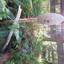 Mooie paddenstoel in het zonlicht