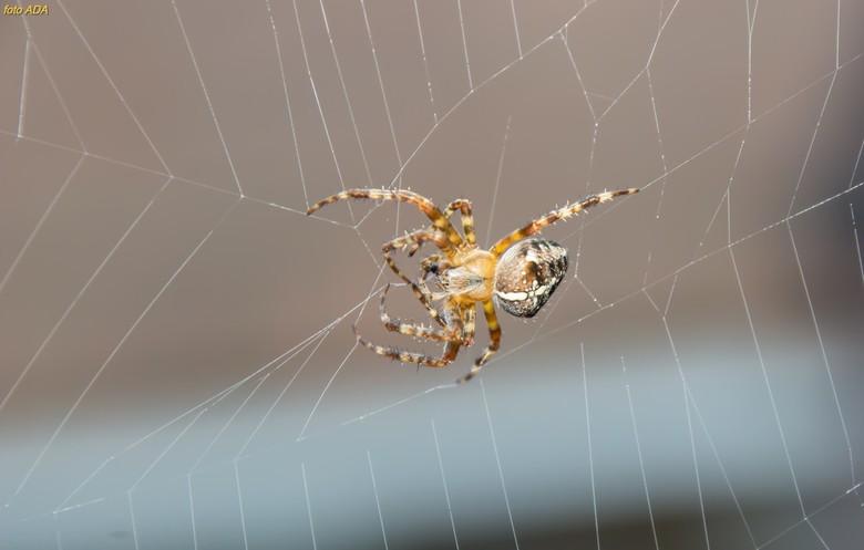 """insteken, omslaan, doorhalen, af laten glippen.... - meneer/ mevrouw spin breidt zijn/ haar web <img  src=""""/images/smileys/smile.png""""/>"""