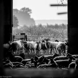 Doorkijkje in een schaapskooi