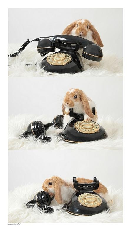 Please, Call me..!* - Een fotoshoot met een baby hangoorkonijntje van 6 weken in mijn fotostudio.<br /> <br /> Erg leuk om te doen..enne knientie we
