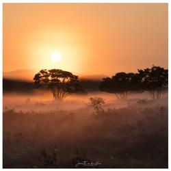 Dutch Serengeti