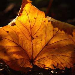 Herfst blad