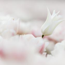 Delicate Softness!