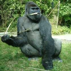 Artis Gorillaman Akili's Lentegevoel
